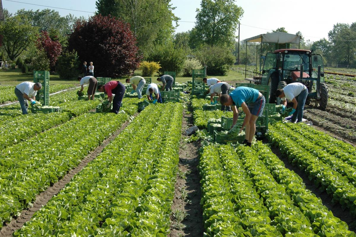 Mangel an Saisonarbeitern gefährdet die Ernten in der EU – Wie das russische Fernsehen darüber berichtet